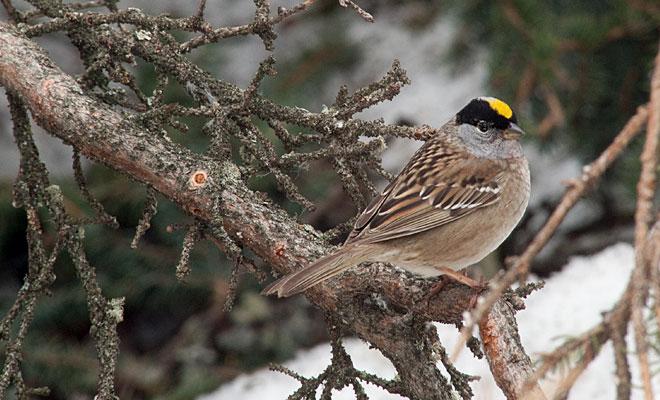 birdlist10