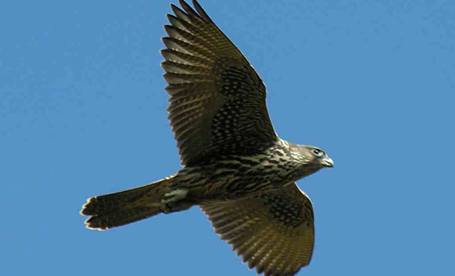 birdlist5